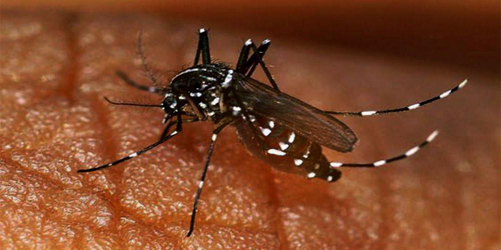 dengue increases in pakistan